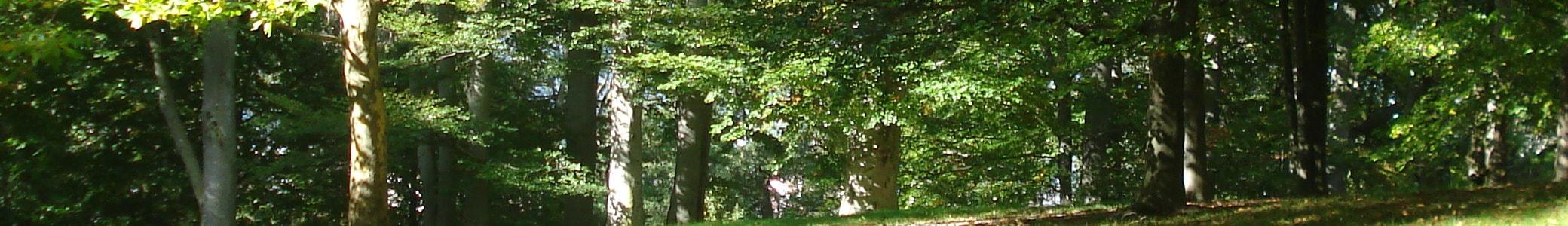 NorrTräd AB Trädfällning